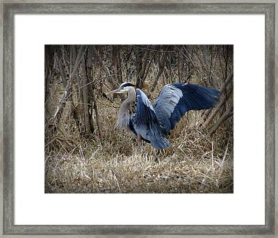 Morning Stretch Framed Print by Marcus Moller