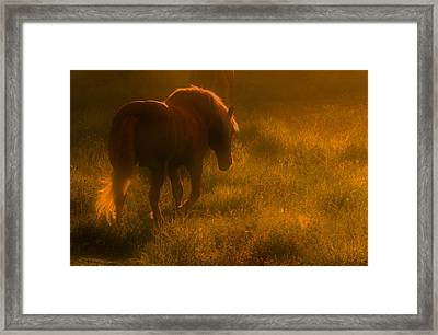 Morning Stroll Framed Print by Jim Vance