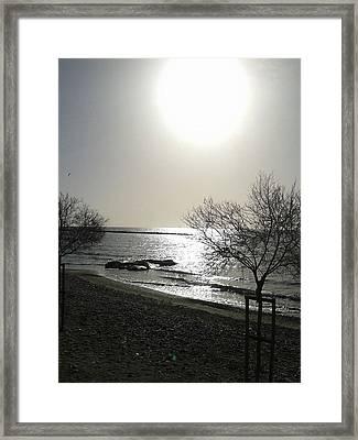 Morning Sun Framed Print by Andreea Alecu