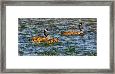 Morning Swim Framed Print by Omaste Witkowski