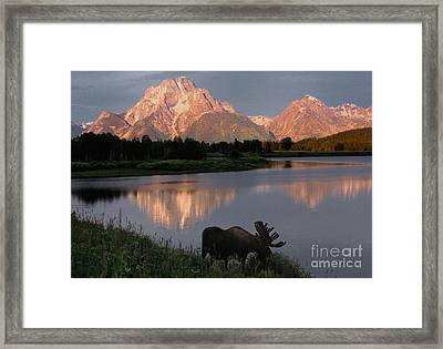 Morning Tranquility Framed Print by Sandra Bronstein