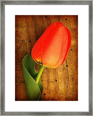 Morning Warmth  Framed Print by Chris Berry