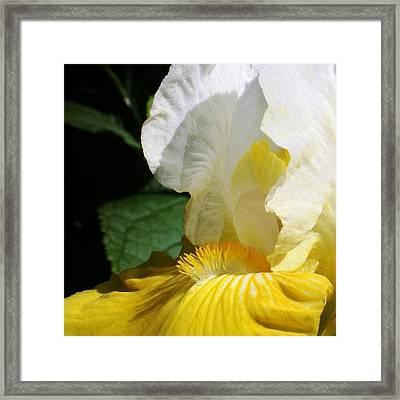 Mornings Light Framed Print by Bruce Bley