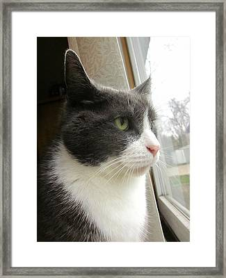 Morty Looks To The Future Framed Print by Guy Ricketts