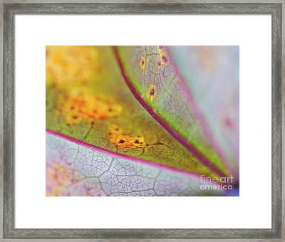 Mosaic Framed Print by Irina Wardas
