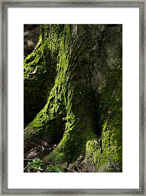 Moss Covered Tree Trunk Framed Print by Christina Rollo
