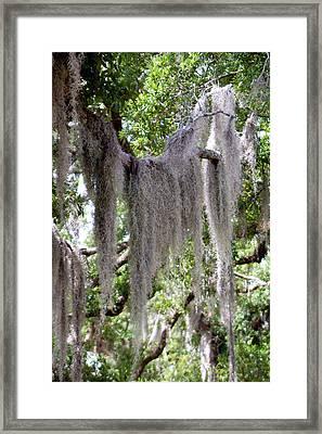 Moss Draped Tree Branch Framed Print by Victoria Leyva
