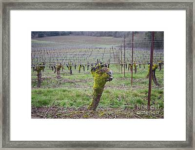 Moss Growing Season Framed Print by Mark Treick
