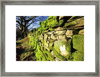 Moss On A Drystone Wall Framed Print by Ashley Cooper