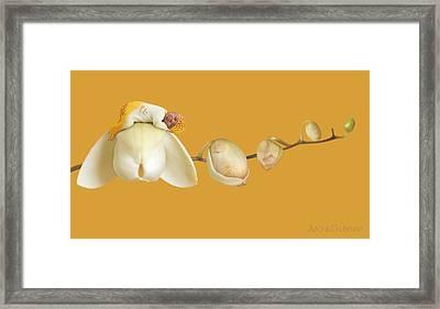 Moth Orchids Framed Print by Anne Geddes
