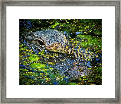 Mother And Baby Framed Print by Mark Andrew Thomas