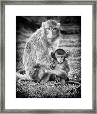 Mother And Baby Monkey Black And White Framed Print by Adam Romanowicz