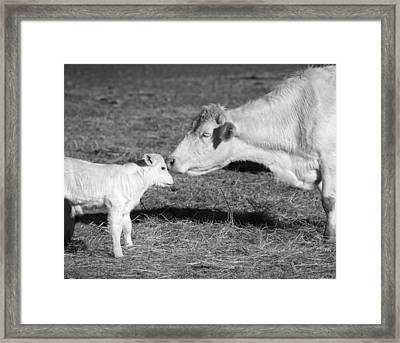 Mother And Child Framed Print by Steven  Michael