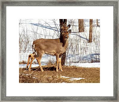 Mother And Daughter Framed Print by Thomas Young