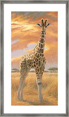 Mother Giraffe Framed Print by Lucie Bilodeau