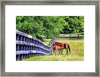 Mother Horse And Foals Framed Print by Alexey Stiop
