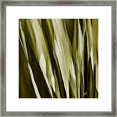 Mother In Law Tongues Framed Print by Brenda Bryant
