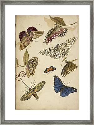 Moths And Butterfiles Framed Print by British Library