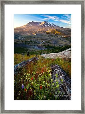 Mount Saint Helens Framed Print by Inge Johnsson