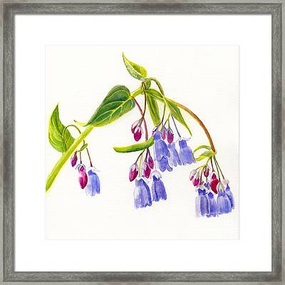 Mountain Bluebells Framed Print by Sharon Freeman