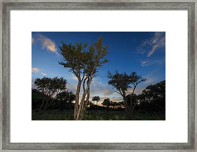 Mountain Mahogany Forest Framed Print by Nick Oman