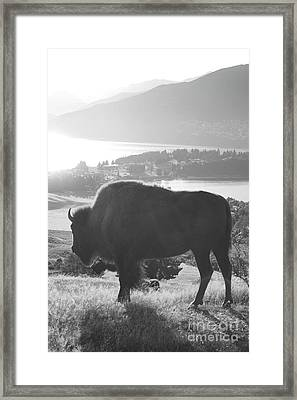 Mountain Wildlife Framed Print by Pixel  Chimp