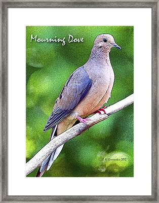 Framed Print featuring the photograph Mourning Dove Digital Art by A Gurmankin
