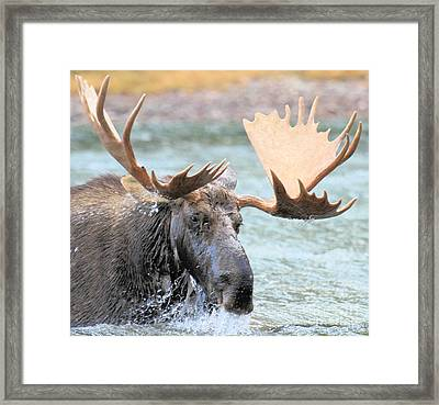 Mouthful Of Water Framed Print by Adam Jewell