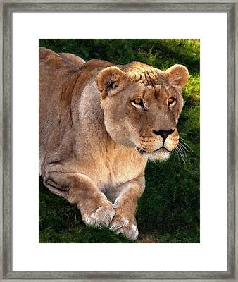 Moving In Painted Version Framed Print by Steve Harrington
