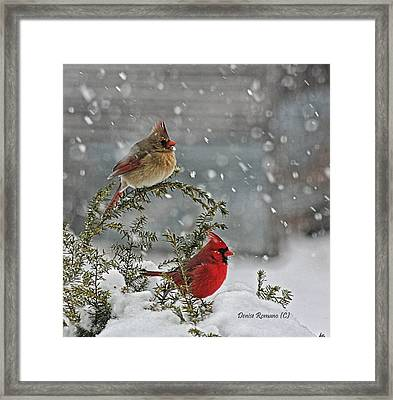 Mr. And Mrs. Cardinal Framed Print by Denise Romano