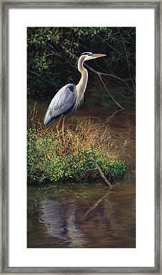 Mr Blue Heron Framed Print by Laurie Hein