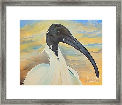 Mr Ibis Framed Print by Una  Miller