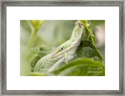 Mr Lizard Framed Print by Erin Johnson