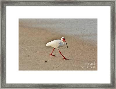 Mr. Natural Framed Print by Lynda Dawson-Youngclaus