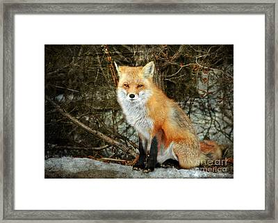 Mr. Personality Framed Print by Photoart BySaMi