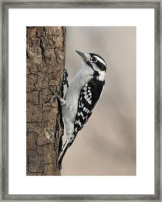 Mr. Woody Framed Print by Lara Ellis