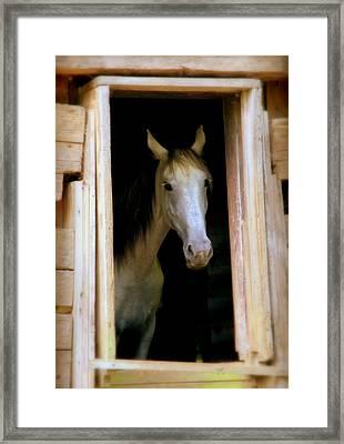 Mrs. Ed Framed Print by Karen Wiles