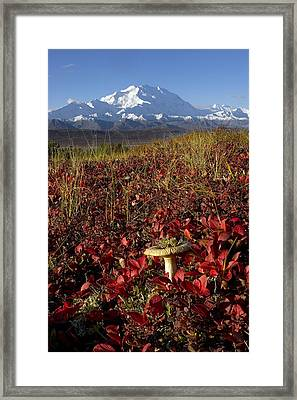 Mt.mckinley With Alpine Bearbery, Fall Framed Print by Gary Schultz