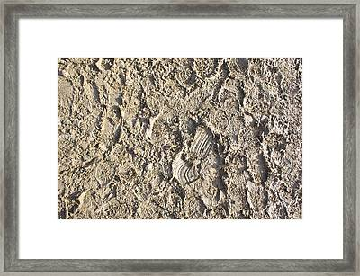 Mud Detail Framed Print by Tom Gowanlock