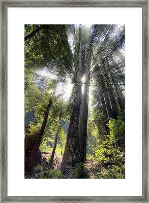 Muir Woods Afternoon Sun Framed Print by Shawn Everhart