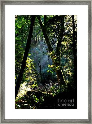 Muir Woods Framed Print by Aidan Moran