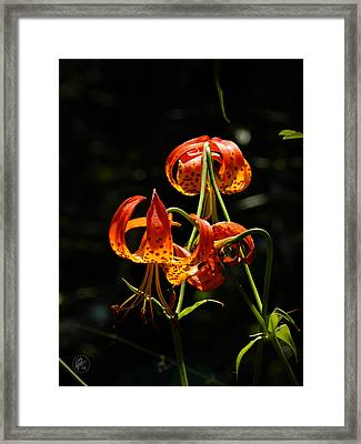 Muir Woods Leopard Lily 002 Framed Print by Lance Vaughn