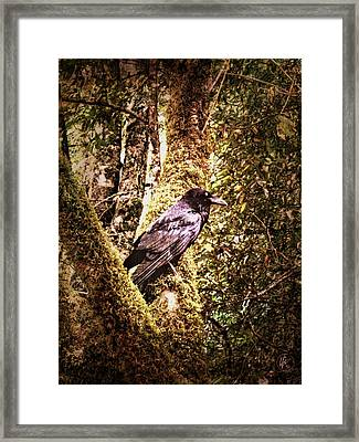 Muir Woods Raven 002 Framed Print by Lance Vaughn