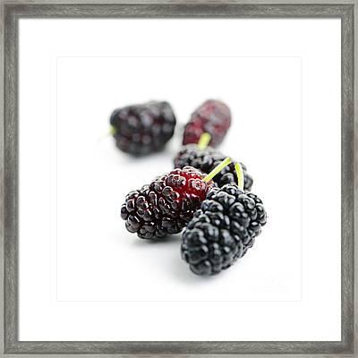Mulberries  Framed Print by Elena Elisseeva