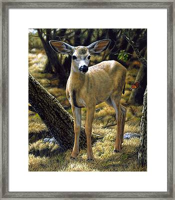 Mule Deer Fawn - Monarch Moment Framed Print by Crista Forest