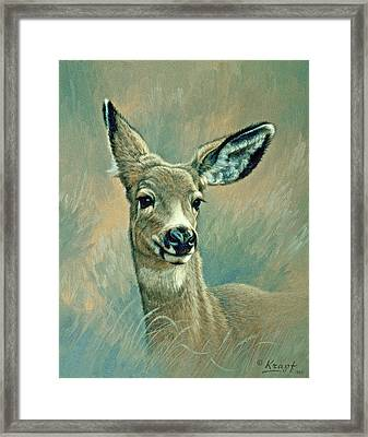 Muley Fawn At Six Months Framed Print by Paul Krapf