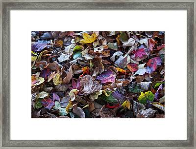 Multicolored Autumn Leaves Framed Print by Rona Black