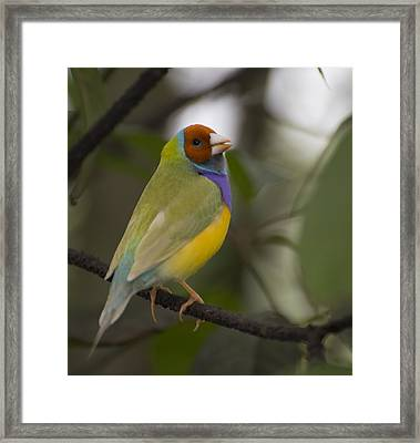 Multicolored Beauty Framed Print by Penny Lisowski