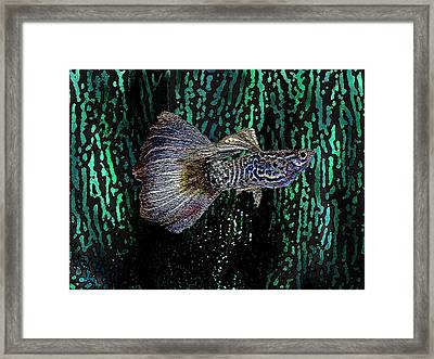 Multicolored Tropical Fish In Digital Art Framed Print by Mario Perez