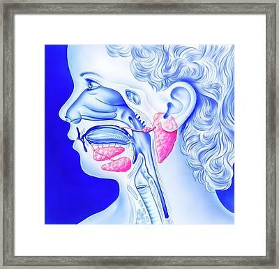 Mumps And Salivary Glands Framed Print by John Bavosi